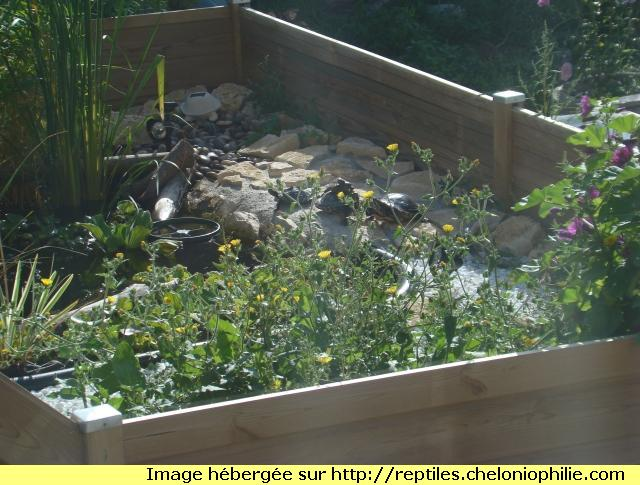 Presentation de mon bassin 1289691274-dsc02324