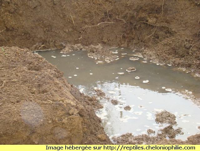 le nouveau bassin  de Cyril 1298730841-dsc02491