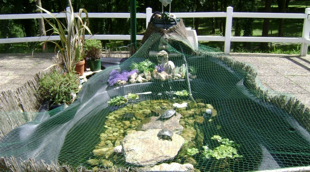 Un tang pour mes tortues identification et maintenance for Bassin exterieur pour tortue de floride