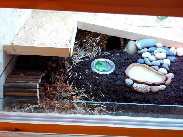 Quelle lampe chauffante pour tortue de terre design de maison - Lampe chauffante tortue ...